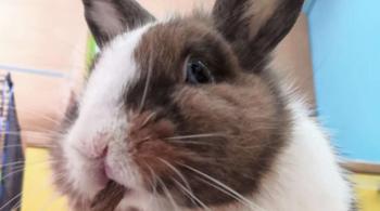 Кролик застрял в банке с едой, но продолжил трапезу…
