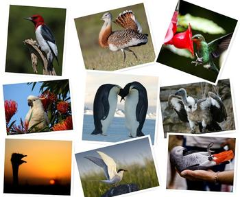 Птичьи рекорды: самые-самые птицы