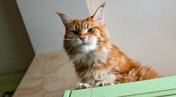 Мегапозитив: веселая история о дрессуре котиков и их хозяев