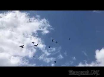 Смотрю на уходящих в точку голубей