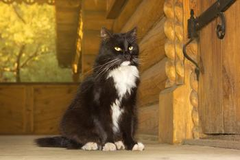 Как кошки указывают на присутствия негативной энергии в доме
