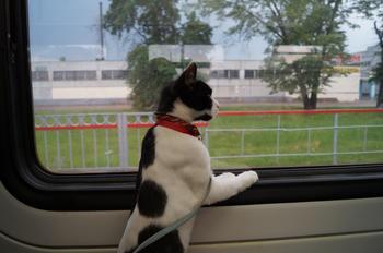 Мачо и его дача