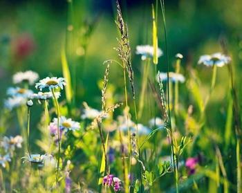 Какие травы могут уменьшить аппетит?