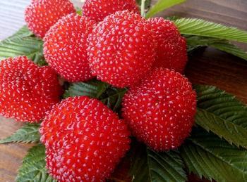 Новинка для дачников — гибрид малины и клубники