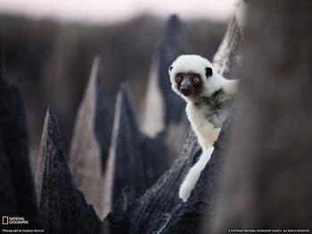 Цинжи-дю-Бемараха: каменный лес Мадагаскара