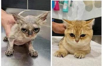 Животные до и после того, как добрые люди подарили им шанс на счастливую жизнь