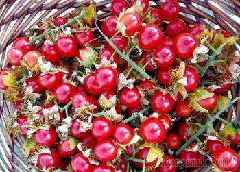 Колючий помидор личи – экзотический овощ, который можно вырастить в средней полосе