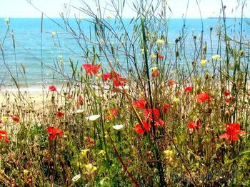 Болгарское побережье Черного моря 29. Курорт Святой Влас 2-ая часть