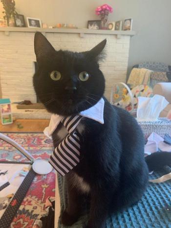Люди делятся смешными фото своих кошек и даже котаны понимают, что такое карантин
