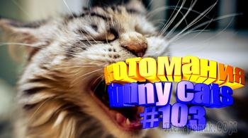 Смешные коты | Приколы с котами | Видео про котов | Котомания #103
