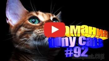Смешные коты | Приколы с котами | Видео про котов | Котомания #92