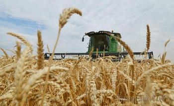 Россия собрала второй по величине урожай пшеницы в истории