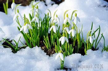Дорогие и любимые ЖЕНЩИНЫ !  С Праздником!  Весны, Красоты и Любви  Вам !
