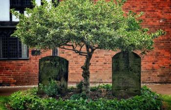 Как по деревьям, посаженным на могиле, можно было определить, кем был покойник