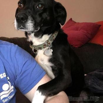 Собачьи обнимашки или доказательства того, что собаки тоже любят обниматься