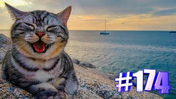 Смешные коты   Приколы с котами   Видео про котов   Котомания # 174