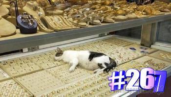 Смешная подборка приколов с котами 😹👍