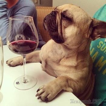 Смешные мысли собак, которым несвойственно человеческое веселье