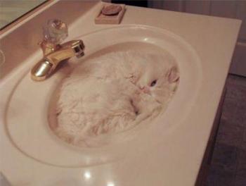 Кошки, которые знают толк в маскировке