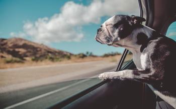 Собака в машине: все заблуждения хозяев