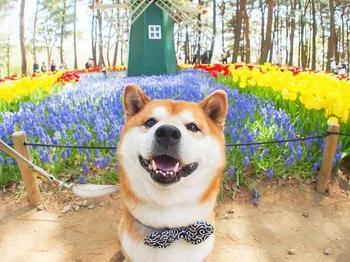 Пёсель по кличке Хачи любит цветочки, а Инстаграм любит его