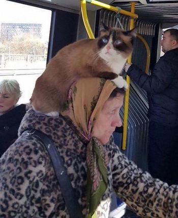 30 чудаков из общественного транспорта, которые вывели безумие на новый уровень