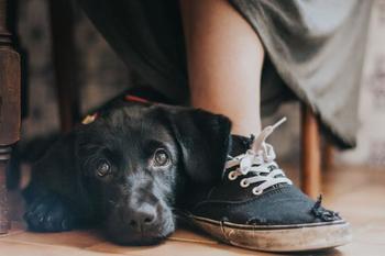 Самые фотогеничные собаки