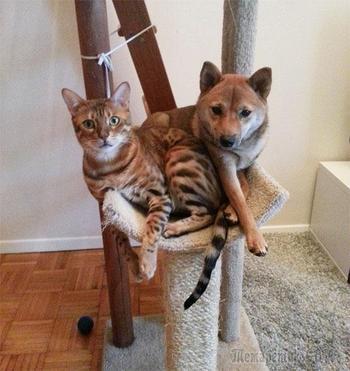 20 смешных собак, которые думают что они кошки