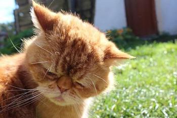 25 очаровательно обиженных животных, перед которыми хочется извиниться и взять их на ручки