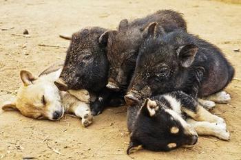 Несколько уморительных щенков, которые спят как, когда и где угодно
