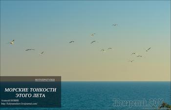 Фотопрогулка. Морские тонкости этого лета