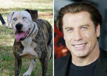 17 собак, которые так похожи на людей, что в них можно разглядеть знакомые черты