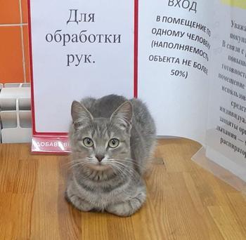 20 находчивых котиков, которые прекрасно устроятся и без лежанки