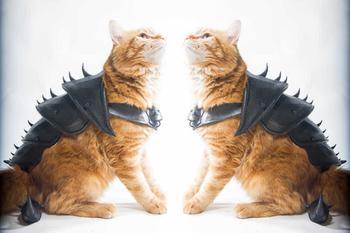 Британец распечатал боевые доспехи для кота
