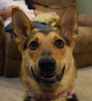 Для поднятия настроения - 20 забавных фотографий животных, глядя на которые сдержать улыбку не получится