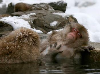 Подборка самых поразительных фотографий животных