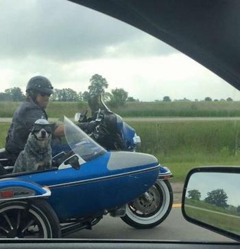 25 забавных и удивительных ситуаций на дороге, заснятых из окна автомобиля