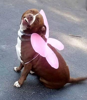 17 фото весёлых собак, которые и дня не могут прожить, чтобы не рассмешить своих владельцев