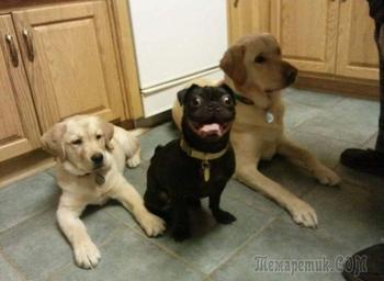 17 самых смешных и неуклюжих собак