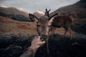 Животные на расстоянии вытянутой руки