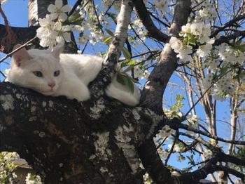 Весна идёт ─ весне дорогу!