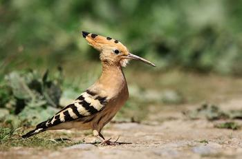 Птицы турецкого озера Ван