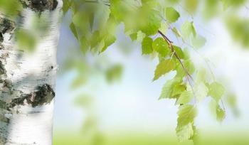 Как деревья делятся своими силами с людьми?