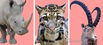 Какие виды животных навсегда исчезли с лица нашей планеты в 20-21 веке