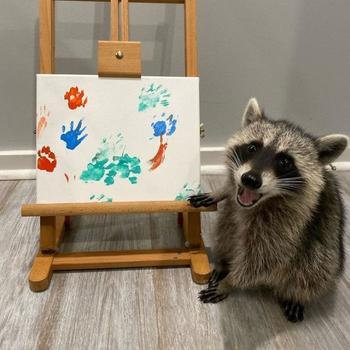 Еноты-художники