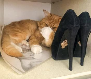 Советы по уходу за обувью, которые значительно упрощают жизнь