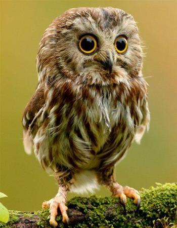 Какая птица покровительствует человеку в зависимости от месяца его рождения