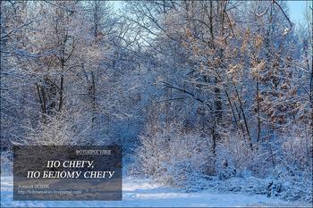 Фотопрогулки.  По снегу, по белому снегу...