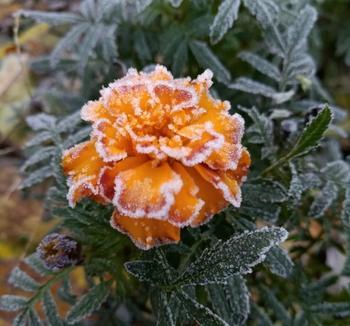Что цветет в ноябре: 10 цветов, которые украсят ваш сад до холодов