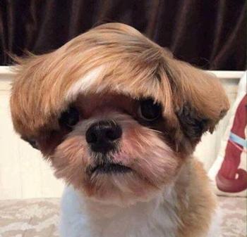 Не самые удачные попытки подстричь пёсиков